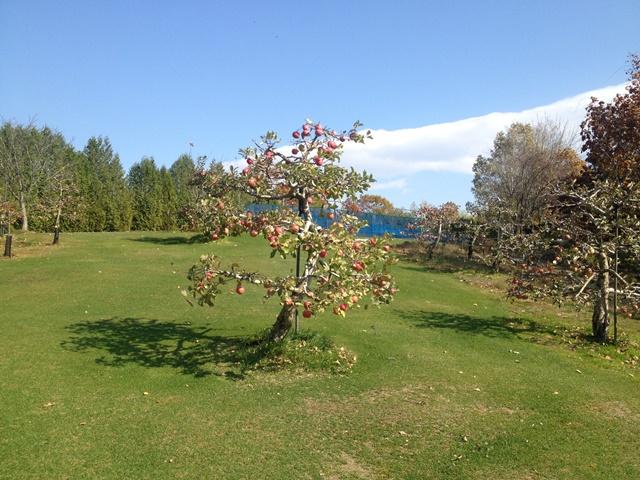 芽室町北明西七線17-2外観リンゴの樹
