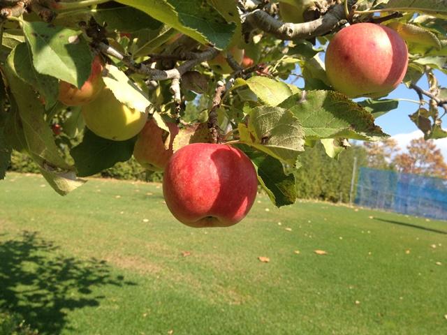 芽室町北明西七線17-2外観リンゴの樹3