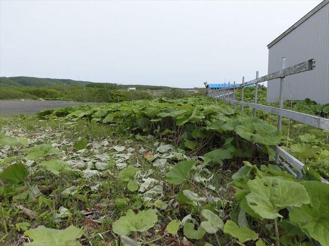 釧路市桂恋192-2他_南側隣地境界線から